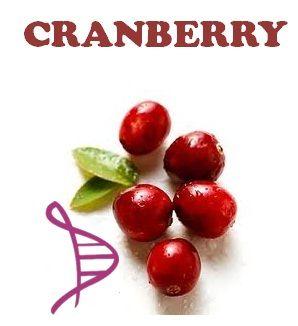 Cranberry 300mg - Prevenção Infecção Urinária - 60 cápsulas. Posologia: Tomar 01 cápsula 02 vezes ao dia.