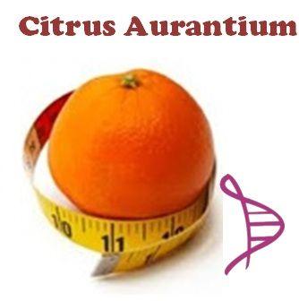 Citrus Aurantium 100mg e Koubo 100mg - 60 cápsulas. Posologia: Tomar 01 cápsula 30 minutos antes do almoço e jantar.
