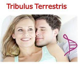 Estimulante Sexual - Tribulus Terrestris 500mg - 90 cápsulas. Posologia: 1 cápsula 3 vezes ao dia, às refeições.