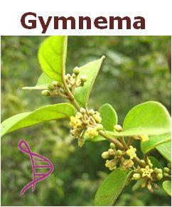 Gymnema Sylvestre 50mg - 60 cápsulas. Posologia: Tomar 1 dose 2 vezes ao dia, 30 minutos antes das refeições.