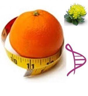 Citrus Aurantium 300mg + Rhodiola Rosea 200mg - 60 cápsulas. Posologia: Tomar 1 cápsula, 2 vezes ao dia (até no máximo, às 17 horas).