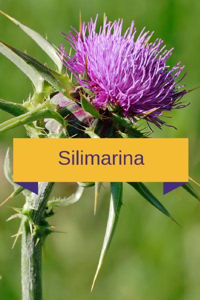 Silimarina 100mg - Hepatoprotetor - 90 cápsulas. Posologia: Tomar 01 cápsula 03 vezes ao dia.