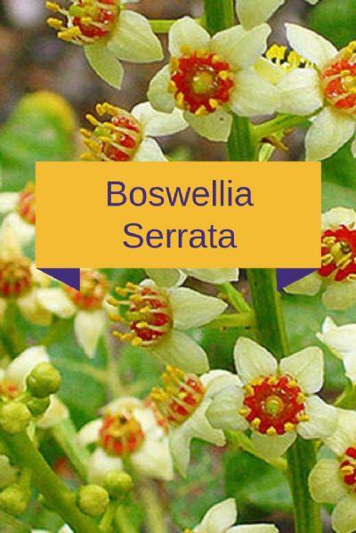 Antireumático - Boswellia Serrata 200mg - 90 cápsulas. Posologia: 1 cápsula 2 a 3 vezes ao dia.