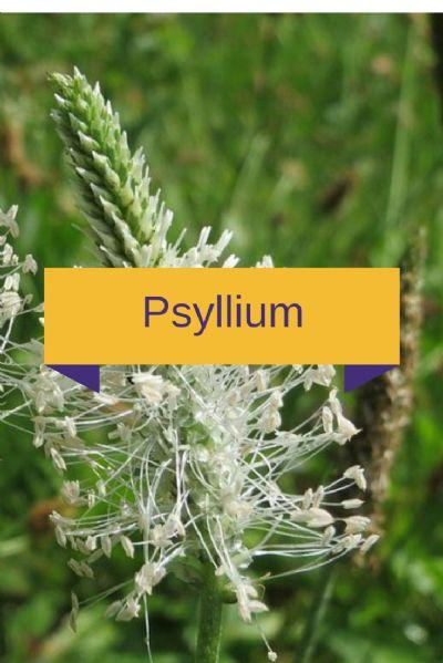 Associação de Fibras/Mucilagens - Psyllium 100mg, Glucomannan 100mg, Goma Guar 100mg e Pectina 100mg - 180 cápsulas