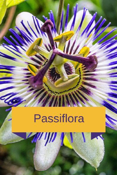 Fitoterápico - Tratamento da Ansiedade 60 cápsulas. Passiflora 200mg, Melissa 150mg, Mulungu 150mg. Posologia: 1 cápsula 2 vezes ao dia.