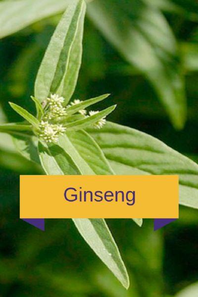 Tônico Estimulante - Ginseng 90 cápsulas