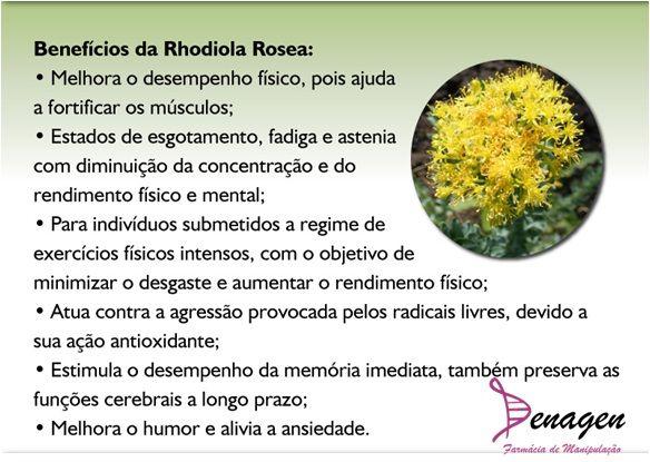 Rhodiola Rosea 500mg - Estresse - 30 c�psulas. Posologia: Tomar 01 c�psula ao dia.